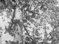 19630700-Campo estivo 04.jpg