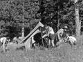 19630700-Campo estivo 06.jpg